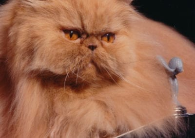 Cherry Pop: The Story of the World's Fanciest Cat
